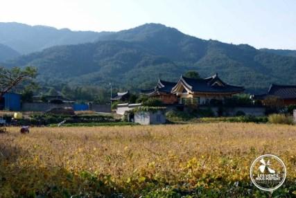 Campagne de Gyeongju Coree-du-sud
