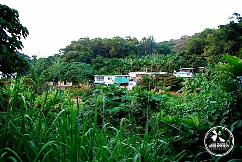 Jungle Lamma Island Hong Kong
