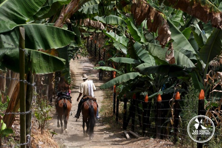 Cavaliers au coeur de la zona cafetera à Salento en Colombie