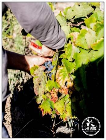 Colline de l'Hirondelle Corbières Vin de France