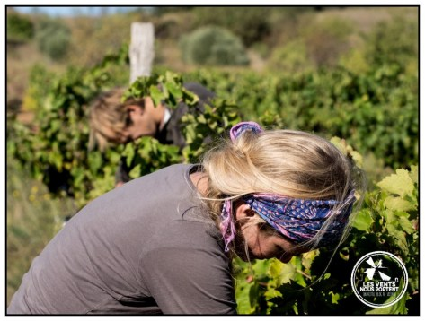 Jennifer Ferrier Buck Colline de l'Hirondelle Corbières Vin de France