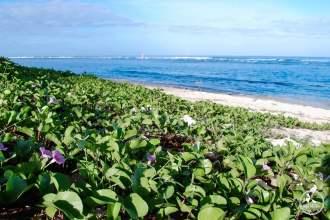 farniente sur la plage de l'ermitage voyage ile de la reunion