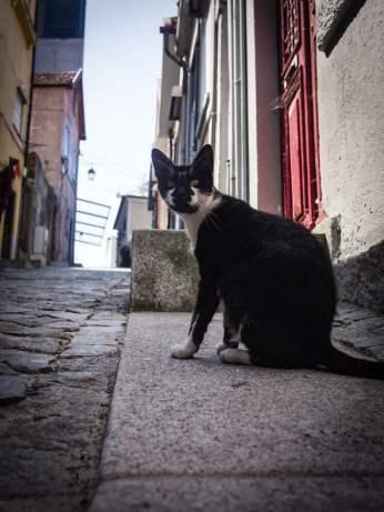 chat dans les rues de porto voyage portugal