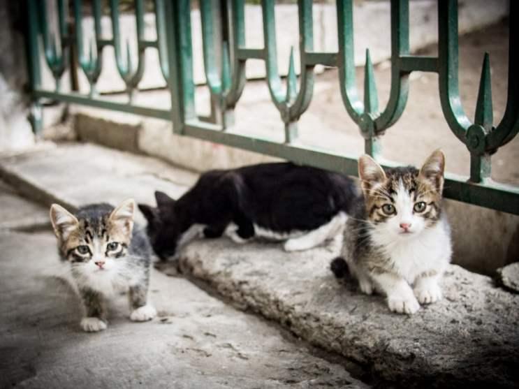 bebe-chat-mignon-voyage-istanbul-turquie