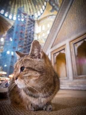 chat-hagia-sofia-sainte-sophie-istanbul-voyage-turquie