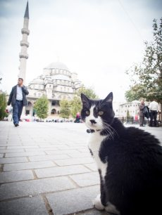 chat-nouvelle-mosquee-voyage-istanbul