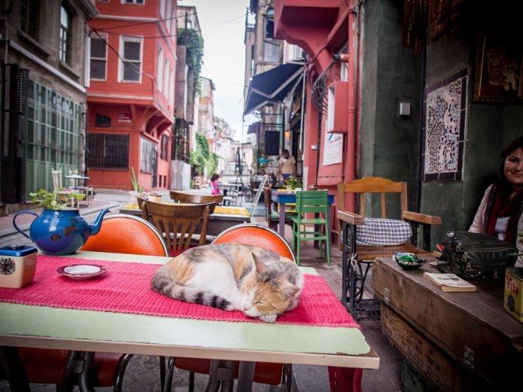 chat-table-naftaline-cafe-fener-istanbul-voyage-turquie