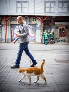 passant-chat-voyage-istanbul