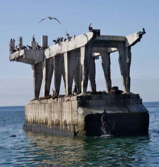 plage lion de mer valparaiso voyage chili