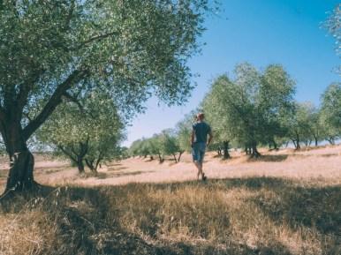 dans les champs d'olivier lors d'un road trip en toscane