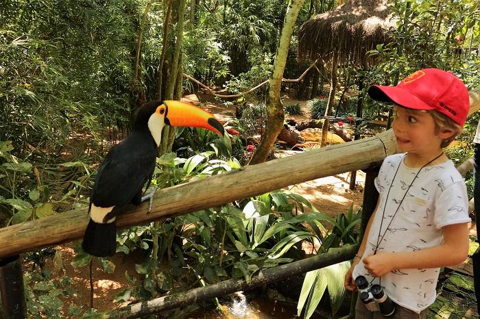 125-toucan-parc-aves