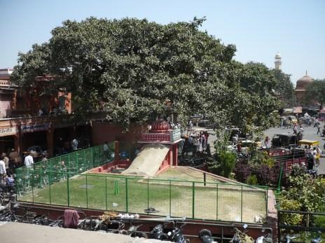Jaipur (81)