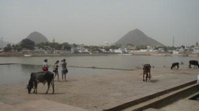 Pushkar (12)