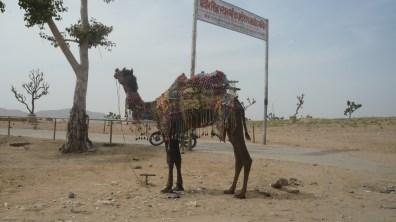 Pushkar (14)