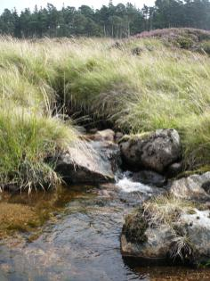 Loch Muick, le 30 aout 2008 (27)
