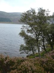 Loch Muick, le 30 aout 2008 (73)