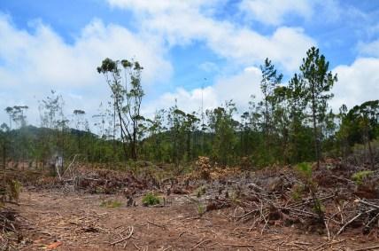 la forêt (1)