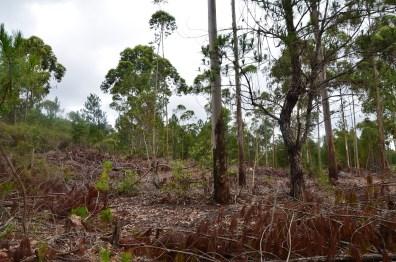 la forêt (2)