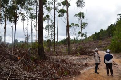 la forêt (4)