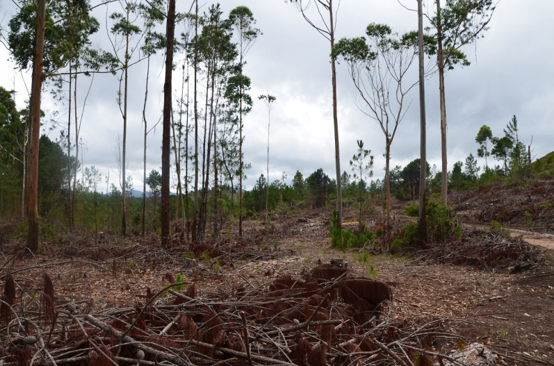 la forêt (6)