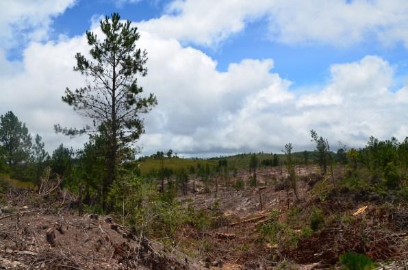 la forêt (7)