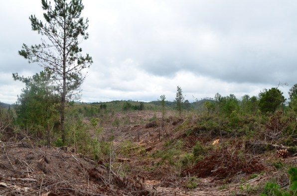 la forêt (8)