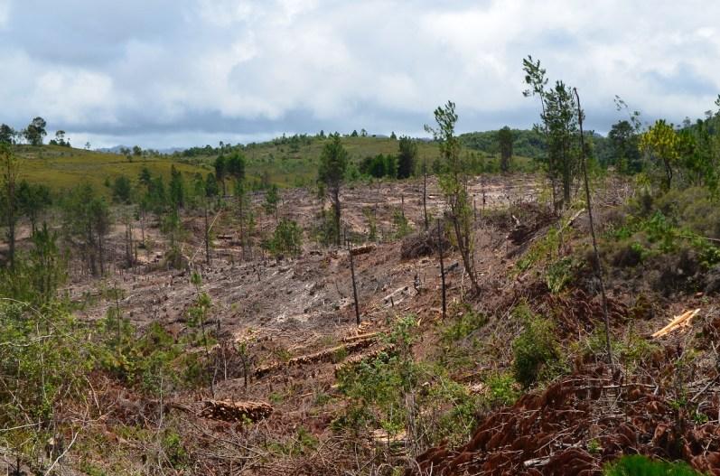la forêt (9)