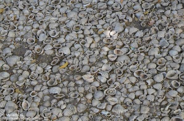 Le sol est constitué de coquillages!!