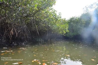 La mangrove ça ressemble un peu au marais Poitevin ^^