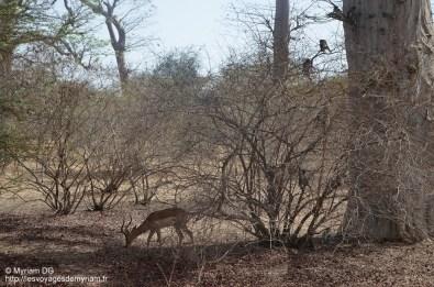 Impala qu'on a envie d'avoir dans son jardin tellement c'est jolis
