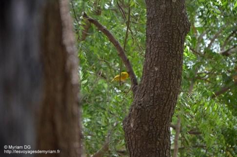 Trop jolis petit oiseau!!!