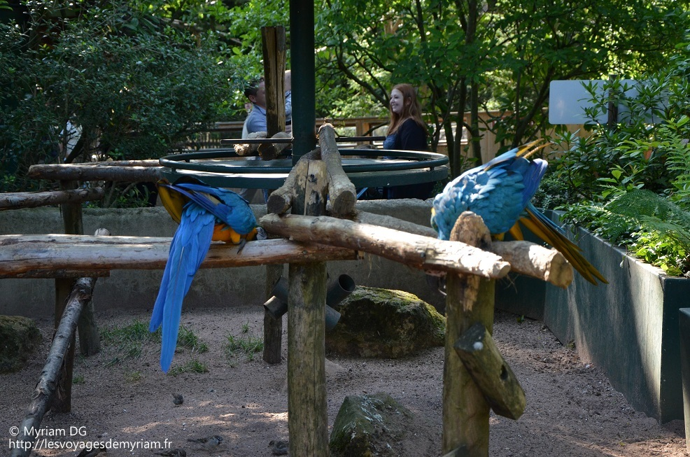 Les oiseaux (seulement ceux-ci) sont bien installés, sans chaine ni enclos.