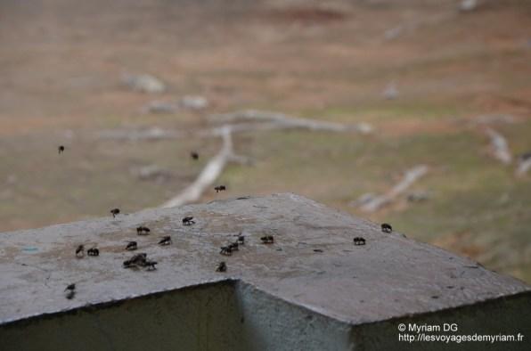 Nos copines les abeilles, elles ont fait du bon boulot!