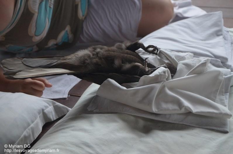 Perso, je n'ai jamais vu un oiseau être à l'aise sur le dos..