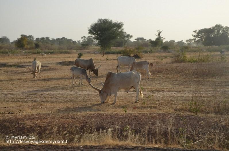 trajet Zig Dakar (13)