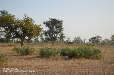 trajet Zig Dakar (7)