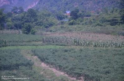 Les champs de piments