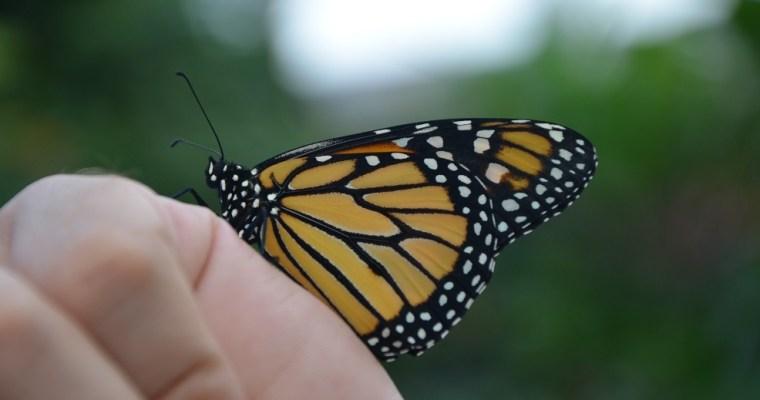 Le conservatoire des papillons
