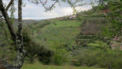 Oliviers entre Vinhais et Bragança