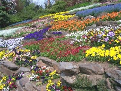 Parterre de fleurs - villa Carlotta
