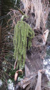 Flore dans les jardins de l'Etat - St Denis (Réunion)