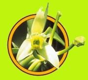 Fleur de Vanille - Coopérative Pro Vanille  (Bras Panon)