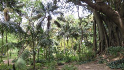 Le jardin d''Estrela