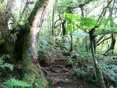 Le sentier botanique du Piton des Songes (Réunion)