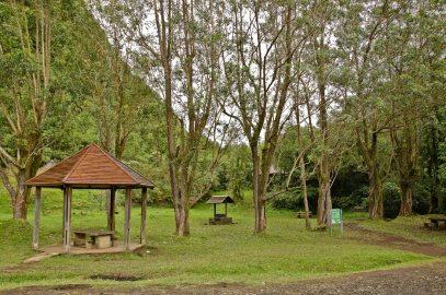Le sentier du Grand Etang (Réunion)