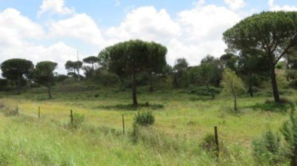 Paysages entre Setubal et Evora