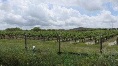 Vignobles entre Setubal et Evora