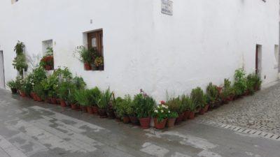 Les ruelles fleuries de Moura