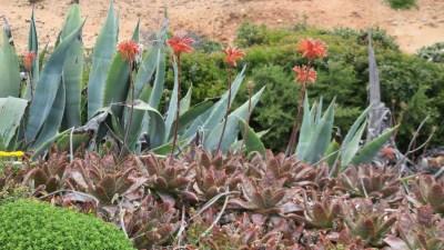 Jolies fleurs sauvage sur la pointe de la forteresse
