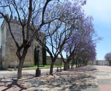 Les jardins de l'Alcazar de Jerez de la Frontera